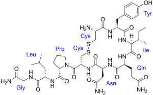 800px-Oxytocin_with_labels